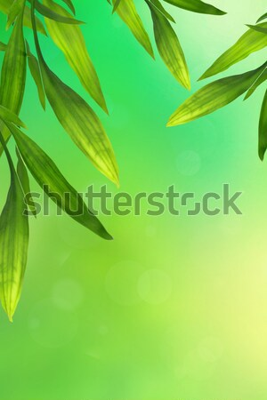 Beautiful bamboo leaves border on green, horisontal  Stock photo © Julietphotography