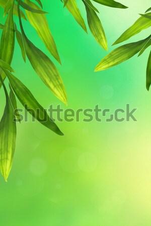 Gyönyörű bambusz levelek keret zöld háttér Stock fotó © Julietphotography