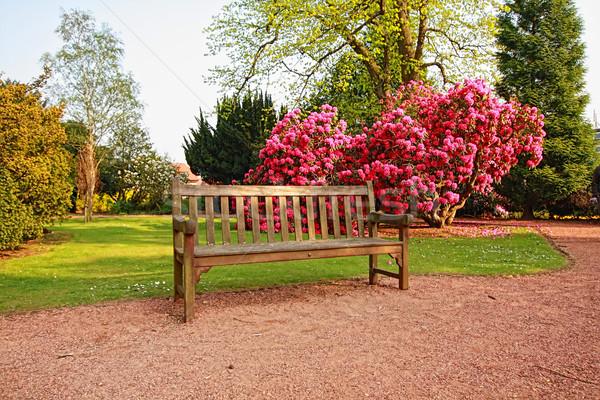 Mooie oude park azalea bomen voorjaar Stockfoto © Julietphotography