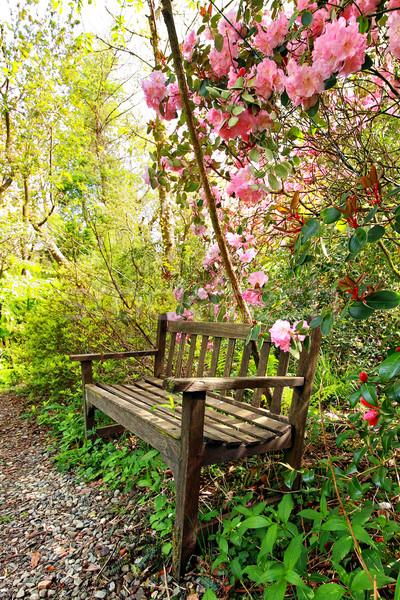 Beautiful romantic garden with wooden bench and azalea trees Stock photo © Julietphotography