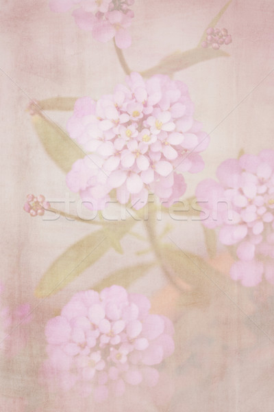 Stock photo: Beautiful defocus soft retro background with tender flowers.