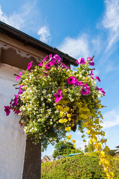 Beautiful hanging basket Stock photo © Julietphotography