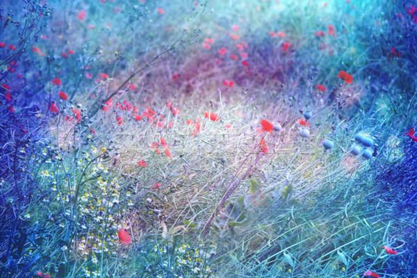 夢のような 芸術的 草原 ポピー ぼけ味 ライト ストックフォト © Julietphotography
