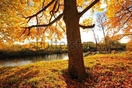 Hermosa otono parque Escocia árbol sol Foto stock © Julietphotography