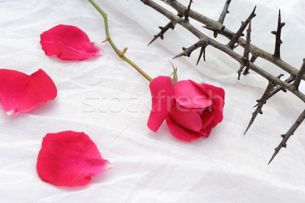 Thorns against white fabric and red rose petals, Christian background Stock photo © Julietphotography