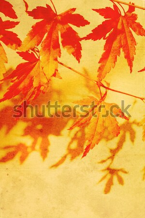 Old, stained, dreamy, autumnal background  Stock photo © Julietphotography