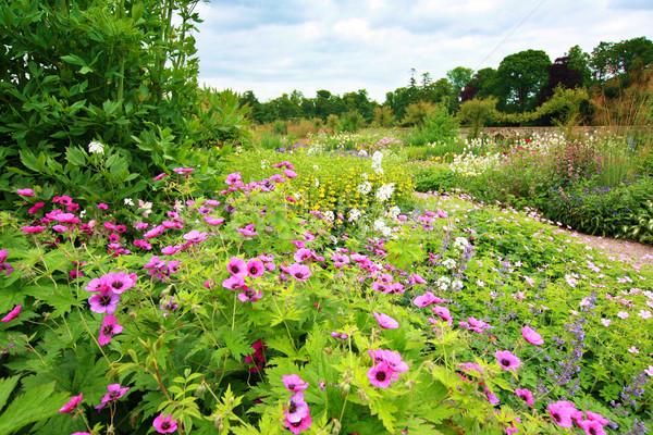 Foto d'archivio: Bella · giardino · completo · fiori · casa · natura