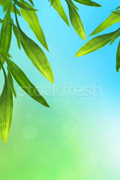 Blue and green background with bamboo leaves Stock photo © Julietphotography