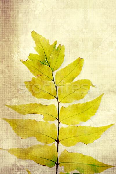 古い ヴィンテージ シダ 葉 装飾的な 紙 ストックフォト © Julietphotography