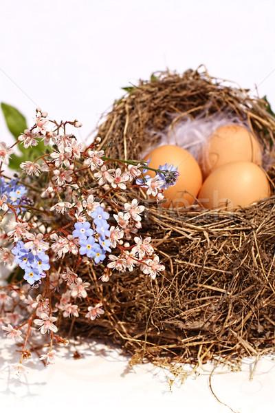 Stockfoto: Drie · eieren · vogels · nest · voorjaar