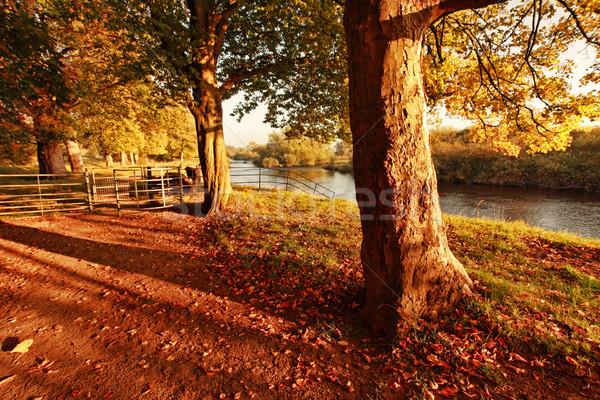 Belle automne parc après-midi paysage Photo stock © Julietphotography