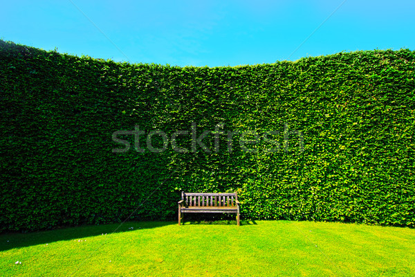 Garden hedges with a bench Stock photo © Julietphotography