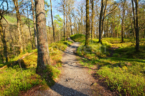 Stock photo: Old trees in a beautiful forest in springtime