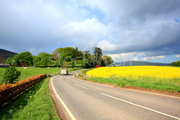 Rural Scottish road with fields of rape Stock photo © Julietphotography