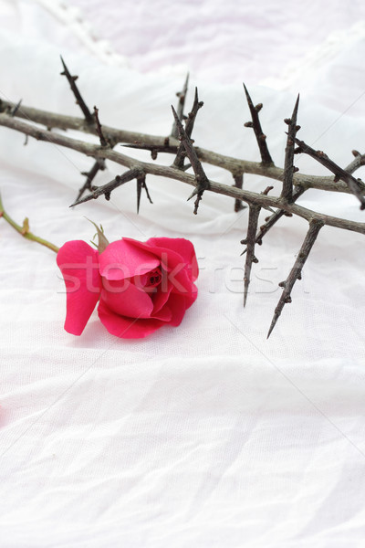Stock photo: Thorns against white fabric and red rose petals, Christian background