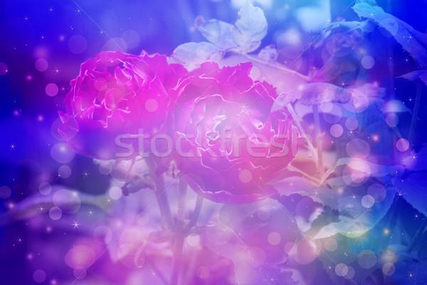 álomszerű gyönyörű virágok közelkép fény rózsaszín Stock fotó © Julietphotography
