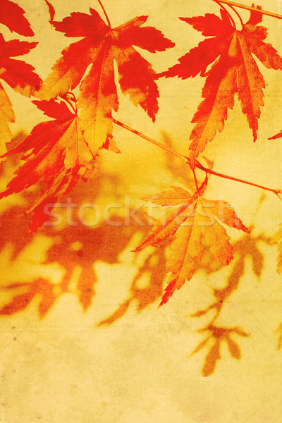 Old, autumnal dreamy, brown background  Stock photo © Julietphotography