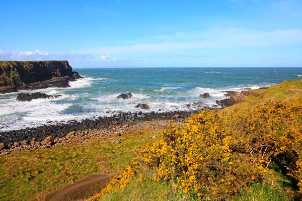İrlandalı bahar manzara yaz okyanus Stok fotoğraf © Julietphotography