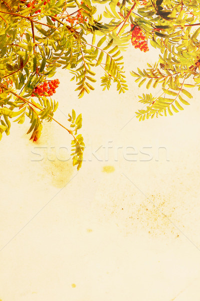 Pretty floral grungy background with rowan trees and berries Stock photo © Julietphotography