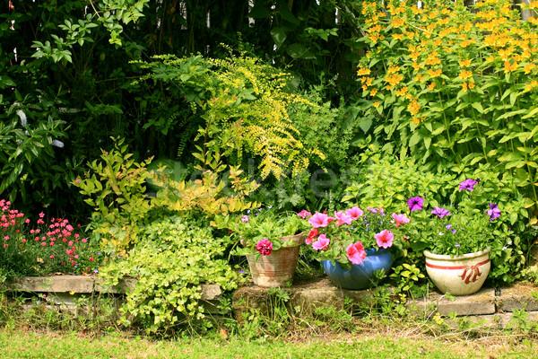 Beautiful summer garden  Stock photo © Julietphotography