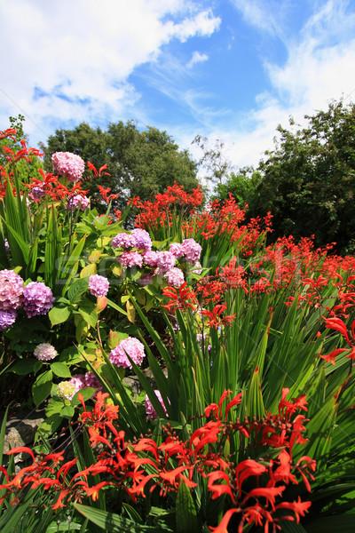 Rózsaszín égbolt virág szépség nyár gyönyörű Stock fotó © Julietphotography