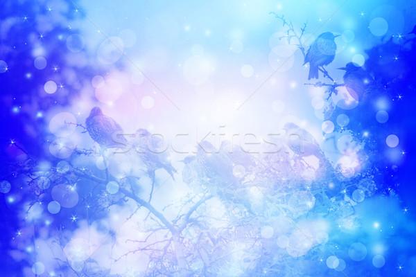 álomszerű téli tájkép madarak fa ágak kert Stock fotó © Julietphotography