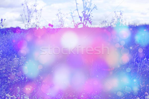 Güzel rüya gibi çayır bokeh ışıklar doku Stok fotoğraf © Julietphotography