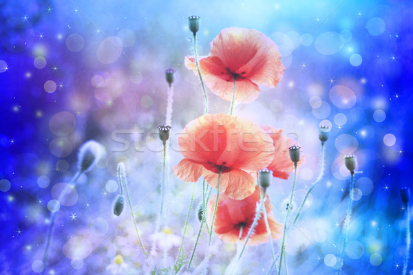 Dreamy artistic poppies with bokeh lights  Stock photo © Julietphotography