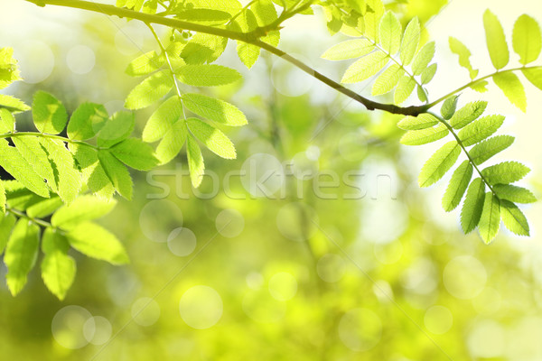 Beautiful spring background  Stock photo © Julietphotography