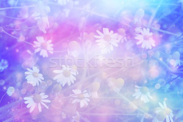美しい 芸術的 草原 ヒナギク 夢のような 色 ストックフォト © Julietphotography