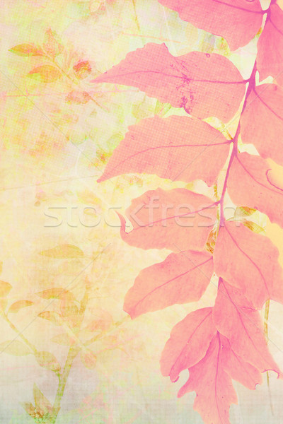 Beautiful artistic background with fern leaf. Stock photo © Julietphotography