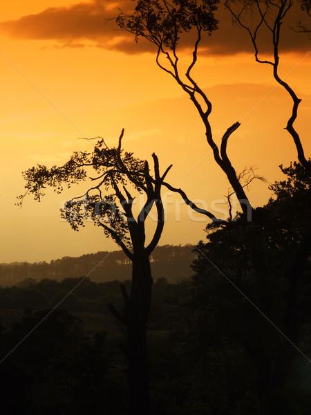 Stockfoto: Bomen · zonsondergang · achtergrond · zomer · veld · leven