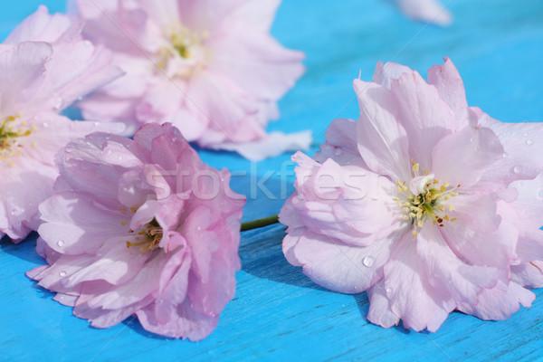 розовый Японский Вишневое цветы ретро синий Сток-фото © Julietphotography
