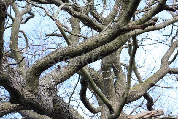 Niezwykły · drzewo · Błękitne · niebo · niebo - zdjęcia ...