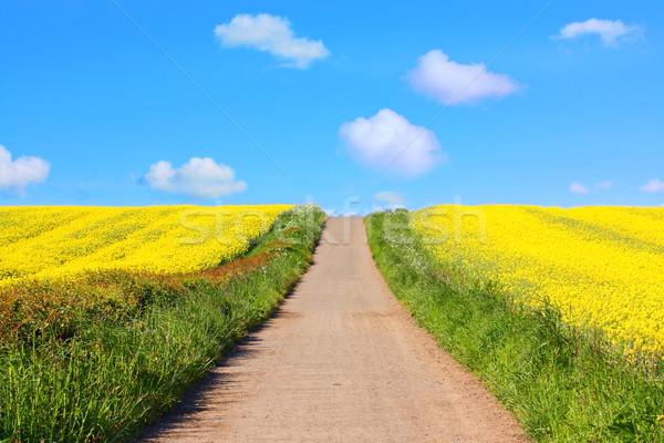 Stock photo: Beautiful fields of rape in Springtime