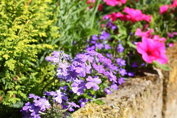 Stock photo: Beautiful summer garden
