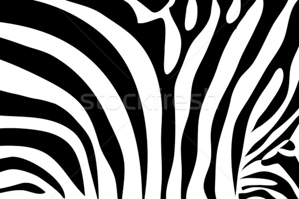 Zebra patterned background black and white Stock photo © Julietphotography