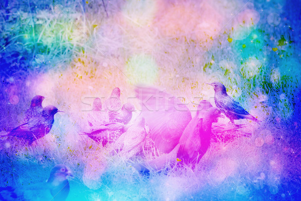 Rêveur jardin scène oiseaux herbe Photo stock © Julietphotography