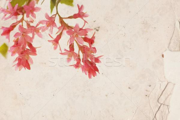Roze bloemen oud papier ontwerp achtergrond retro Stockfoto © Julietphotography