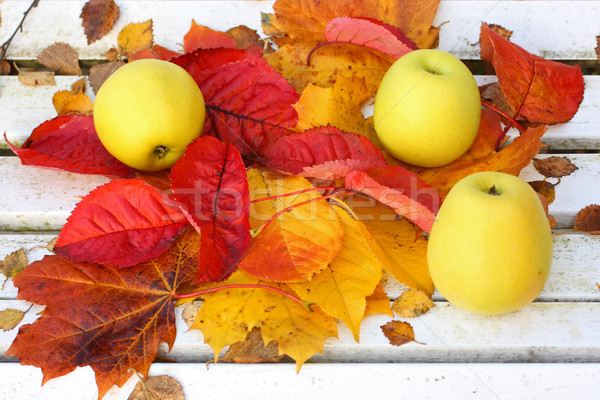Vert pommes jardin automne temps Photo stock © Julietphotography