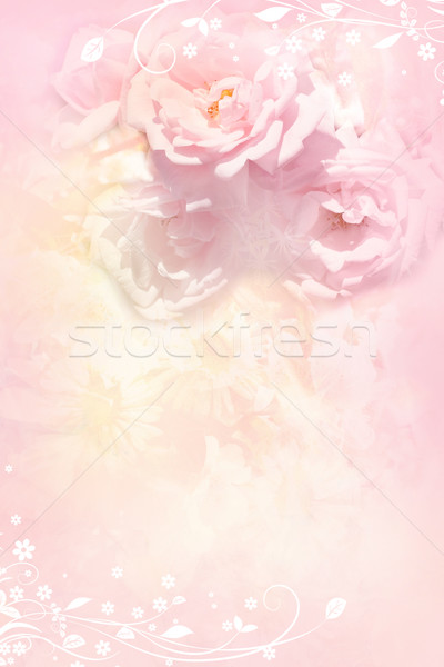 Bella soft rose romantica luce rosa Foto d'archivio © Julietphotography