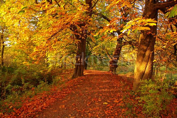 Belle automne parc après-midi route Photo stock © Julietphotography