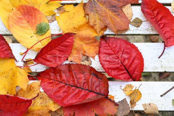 Stock fotó: Gyönyörű · fényes · őszi · levelek · fehér · pad