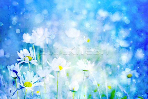 Beautiful artistic background with meadow of daisies in dreamy colors with bokeh lights Stock photo © Julietphotography