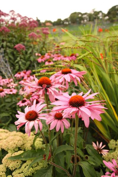 Beautiful summer flowers Stock photo © Julietphotography