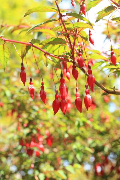 Stock fotó: Bokor · díszítő · kert · közelkép · virág · tavasz