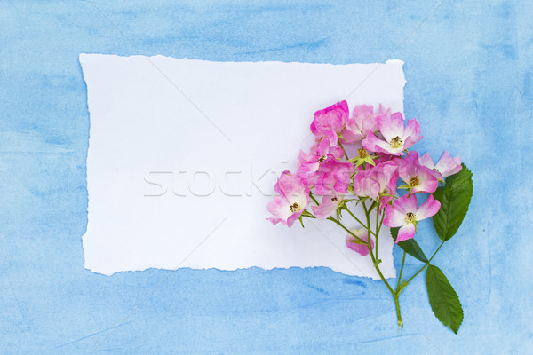 Beautiful floral background with pink roses on blue  Stock photo © Julietphotography