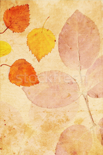 Beautiful vintage background with autumnal leaves  Stock photo © Julietphotography