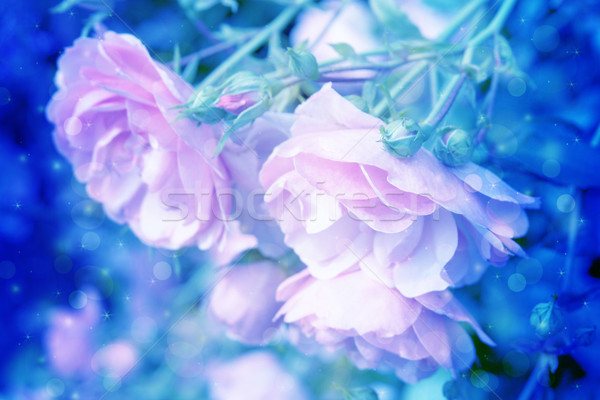 Beautiful roses artistic dreamy background with bokeh lights  Stock photo © Julietphotography