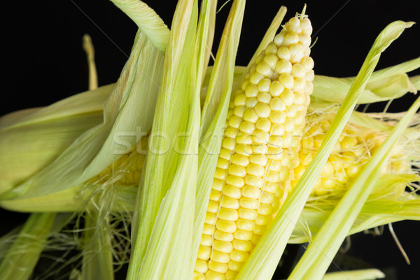 Fresh corn on the cob over a black background Stock photo © juniart